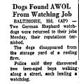 Dogs Found AWOL from Watching Job
