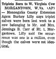 Triplets Born to W. Virginia Cow